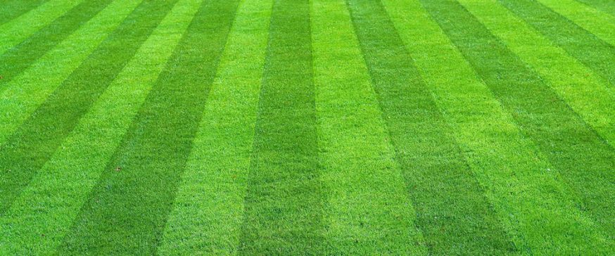 early spring lawn care tips - 874×364